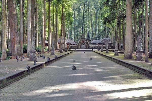 Legenda Sangeh Pulau Bali Tempat Menarik Berpenghuni Monyet Liar