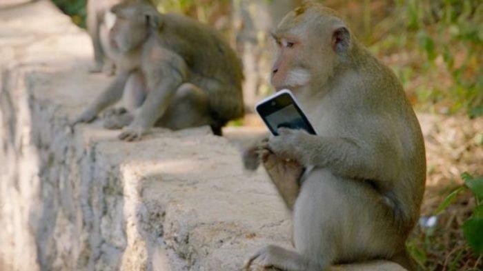 Tempat Wisata Menarik Melihat Monyet Liar di Sangeh Pulau Bali (suryamalang.tribunnews.com)