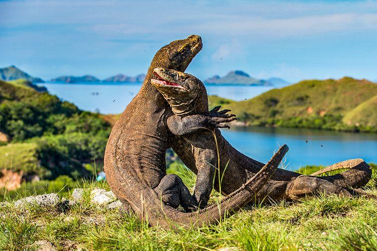Wisata Pulau Komodo yang Memukau (travel.kompas.com)