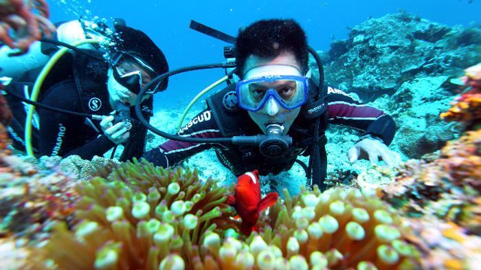 Wonderful Indonesia diving di kepulauan raja ampat (Tribunnews.com)