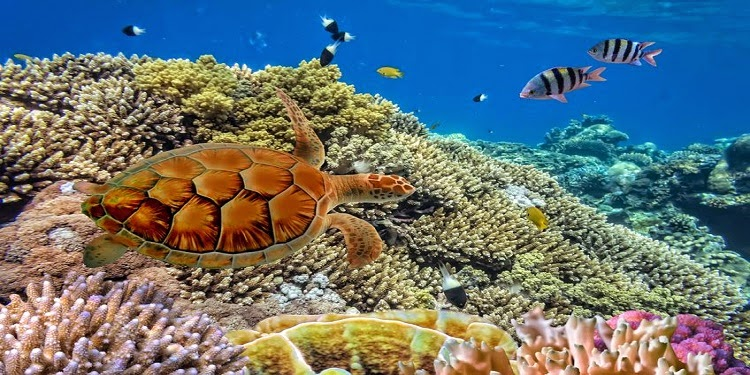 Wisata Pelestarian Penyu Sisik di Pulau Pramuka Kepulauan Seribu (Travel Buana Persadatama)
