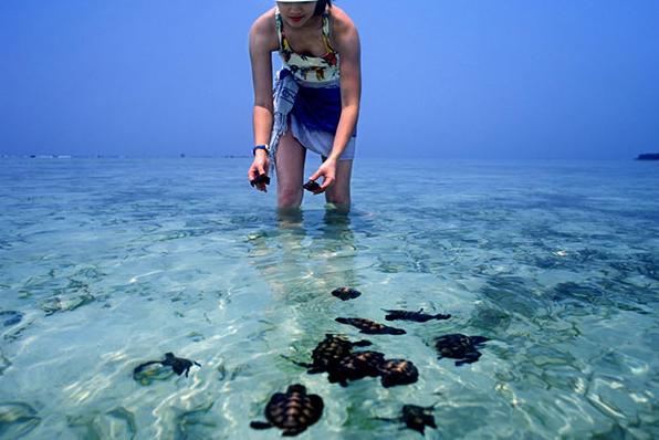 Wisata Penangkaran Penyu Sisik Pulau Pramuka (Travel Wisata Indonesia)