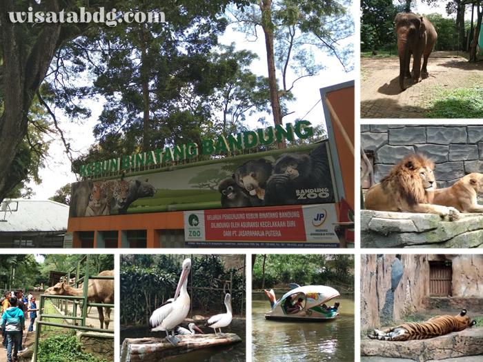 Obyek Wisata di Bandung, Kebun Binatang Bandung (wisatabdg.com)